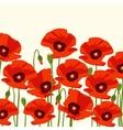 The poppy flowers vector image