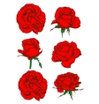 Red rose flowers and buds icons isolated on white vector image vector image