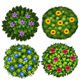 Bushes with colorful flowers vector image vector image