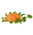 Fresh Oranges and Leaves Composition vector image vector image