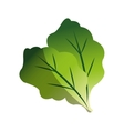 Isolated lettuce design vector image