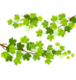 Green maple leaves vector image