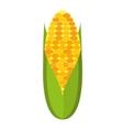corn cob isolated icon design vector image