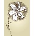 Lily sketch vector image