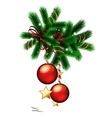 Branch of christmas tree vector image vector image