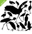 Bird silhouettes vector image