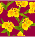 yellow canna indica - canna lily indian shot on vector image