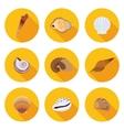 flat icons seashells vector image