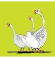 Farm bird wild or domestic goose vector image
