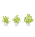 Beautiful Yucca Trees in Three Flower Pot vector image vector image