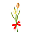 Lovely Two Fresh Tulips with Red Ribbon vector image