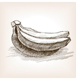 Banana sketch style vector image