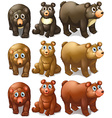 Collection of bears vector image