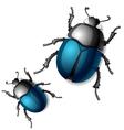 beetle vector image vector image