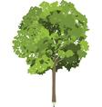 Pencil tree vector image