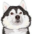 dog Alaskan Malamute breed vector image