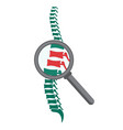 Spine with magnifying glass vector image
