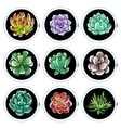 Stickers with succulents vector image