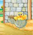 little chick hatching egg in barn vector image vector image