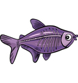 x-ray fish vector image
