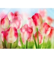 Red tulip with bokeh EPS 10 vector image