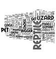 what types of lizards make good reptile pets text vector image