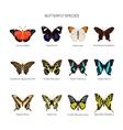 Butterflies set in flat style design vector image