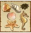 Decor of seashells and seaweed six icons vector image