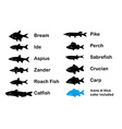 Set of River and Limnetic Fishes vector image