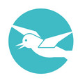 gull flying isolated icon vector image