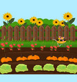 pumpkin harvest garden countryside vector image