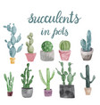set of cactus and succulents isolated on white vector image