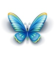 blue butterfly with color vector image