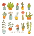 Beautiful set of hand drawn houseplants vector image vector image