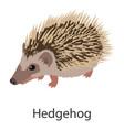 hedgehog icon isometric style vector image