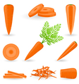 Icon Set Carrot vector image vector image