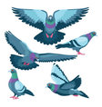 Pigeons on white background vector image