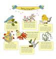 springtime infographic vector image