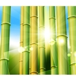 bamboo nature background vector image vector image