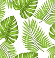Seamless Wallpaper with Green Tropical Leaves for vector image