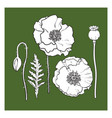 hand drawn set of red poppy flower bud pod leaf vector image