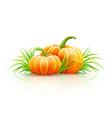 ripe pumpkin vegetables vector image