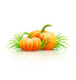 ripe pumpkin vegetables vector image