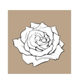 Deep contour rose top view isolated sketch vector image vector image