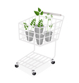 Four Evergreen Plants in A Shopping Cart vector image vector image