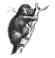 Porcupine vintage engraving vector image vector image