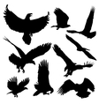 Bald eagles silhouettes isolated on white vector image