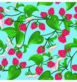 raspberry seamless vector image