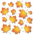 maple vector image vector image