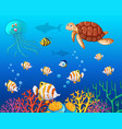 many types of sea animals under the ocean vector image